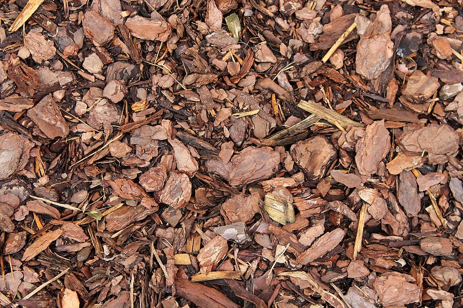 Bark Substrate
