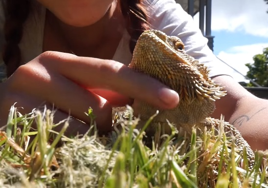 Taking the Bearded Dragon with You