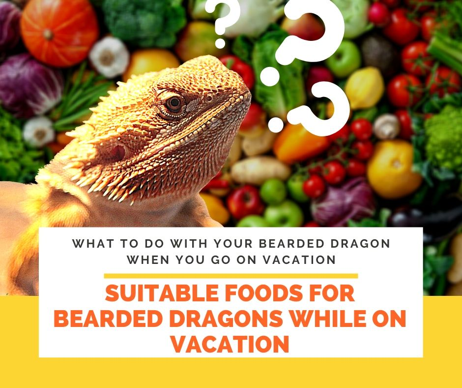Suitable Foods for Bearded Dragons While on Vacation