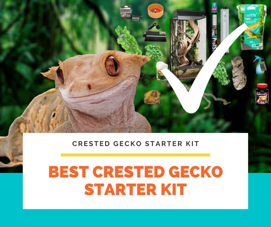 Best Crested Gecko Starter Kit