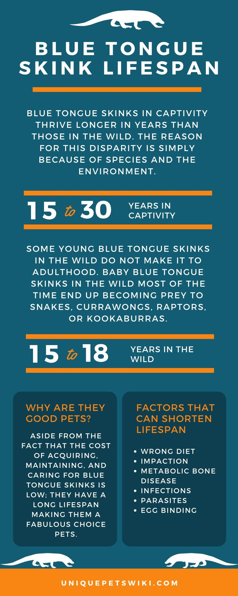 Blue Tongue Skink Lifespan Infographic