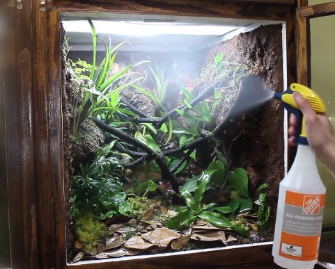 Crested Gecko Tank Cleaning