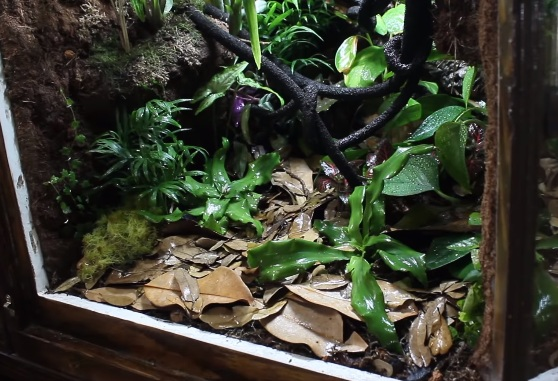 Crested Gecko Tank Water and Humidity