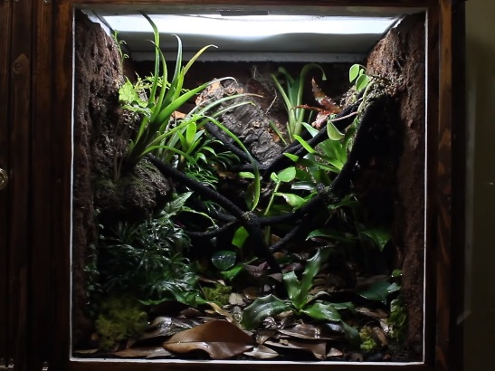 Crested Gecko Tank Landscaping