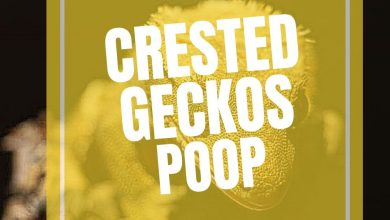 Photo of The Complete Guide to Crested Gecko Poop: Everything you need to know