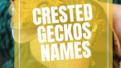 Photo of 300+ Crested Gecko Names