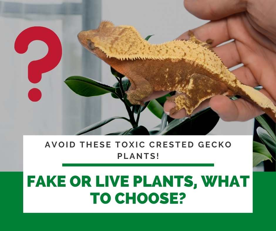 Fake Or Live Plants, What To Choose?