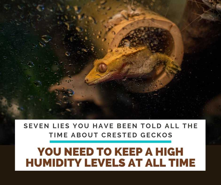That You Need To Keep A High Humidity Levels At All Time