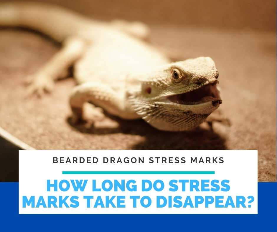 How Long Do Stress Marks Take To Disappear?