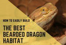 Photo of Create Your Bearded Dragon Habitat The Easiest Way