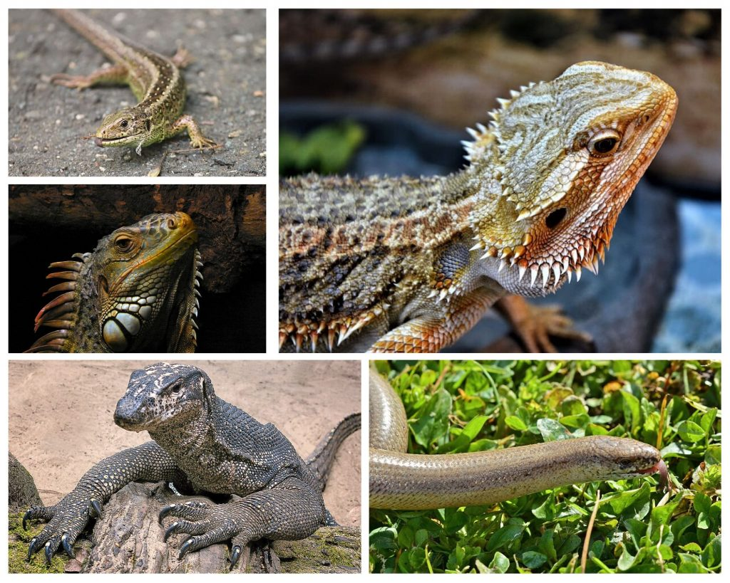 Reptiles with Third Eye