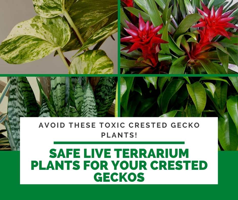 Safe Live Terrarium Plants for Your Crested Geckos