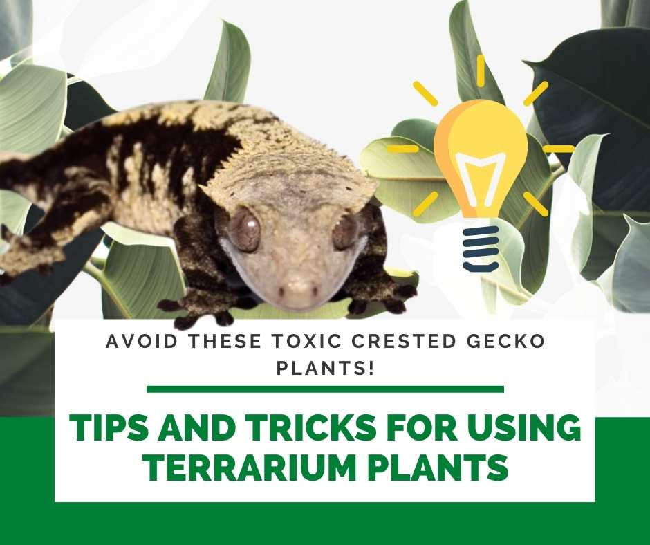 Tips And Tricks For Using Terrarium Plants
