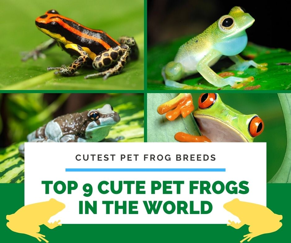 Top 9 Cute Pet Frogs In The World