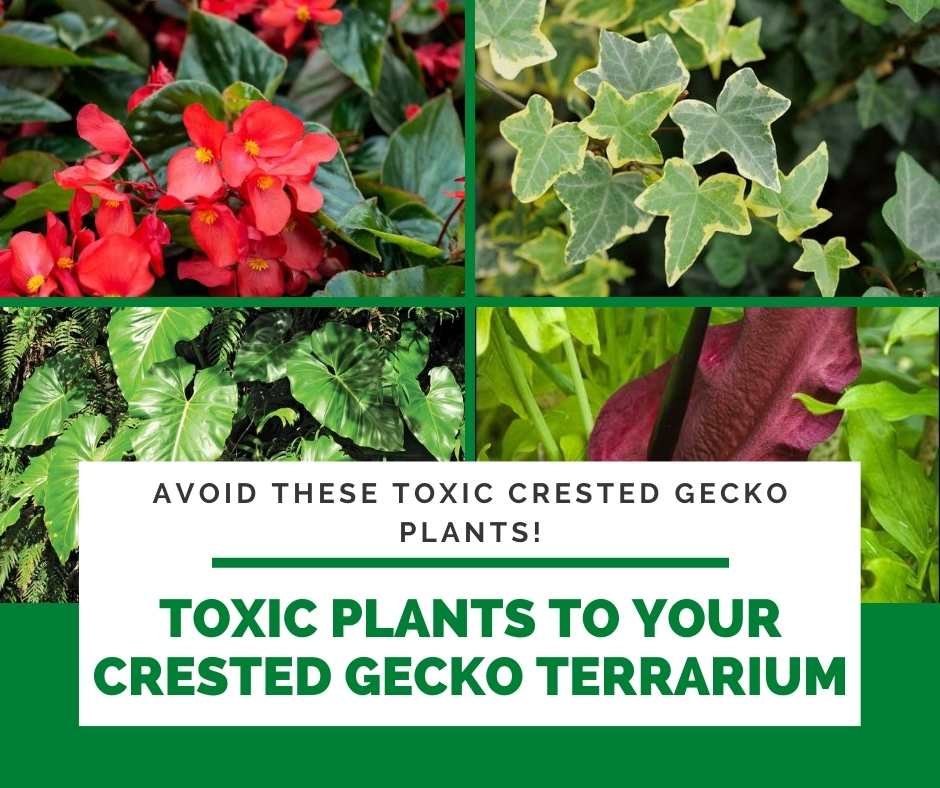 Toxic Plants To Your Crested Gecko Terrarium