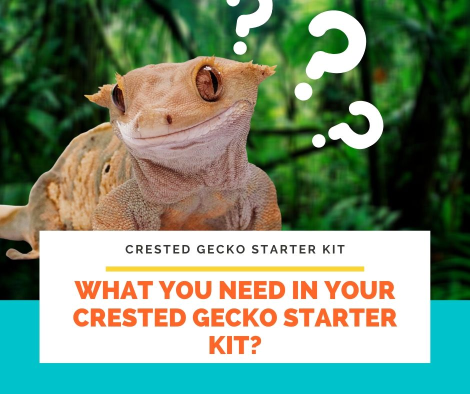 What You Need In Your Crested Gecko Starter Kit?