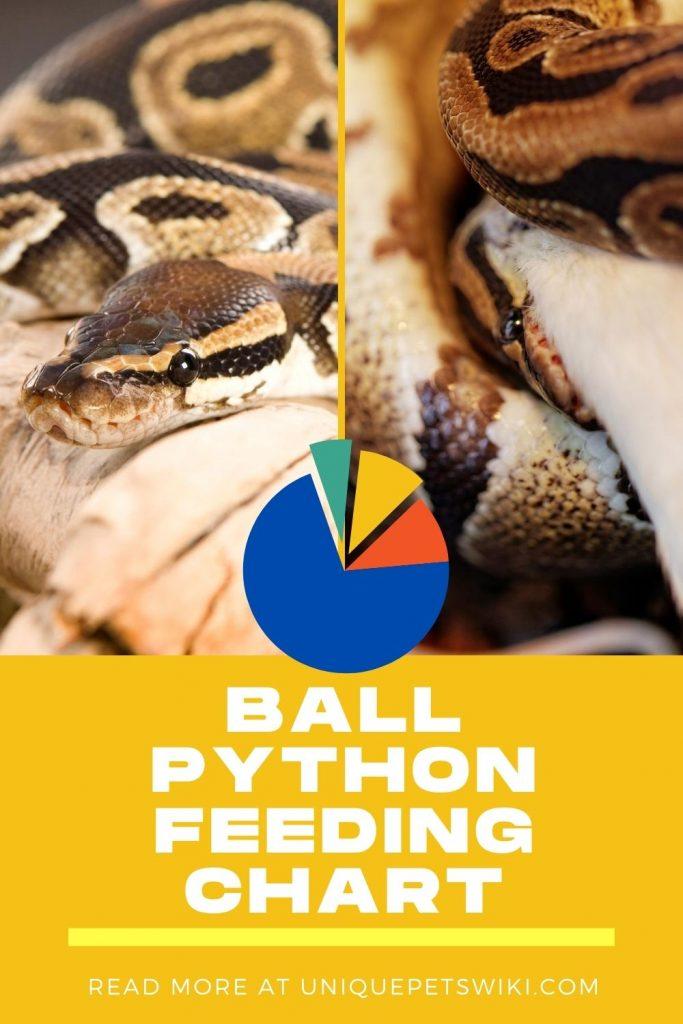 Ball Python Feeding Chart Pinterest Pin