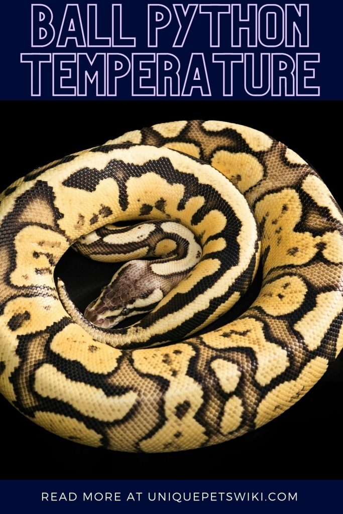 Ball Python Temperature Pinterest Pin