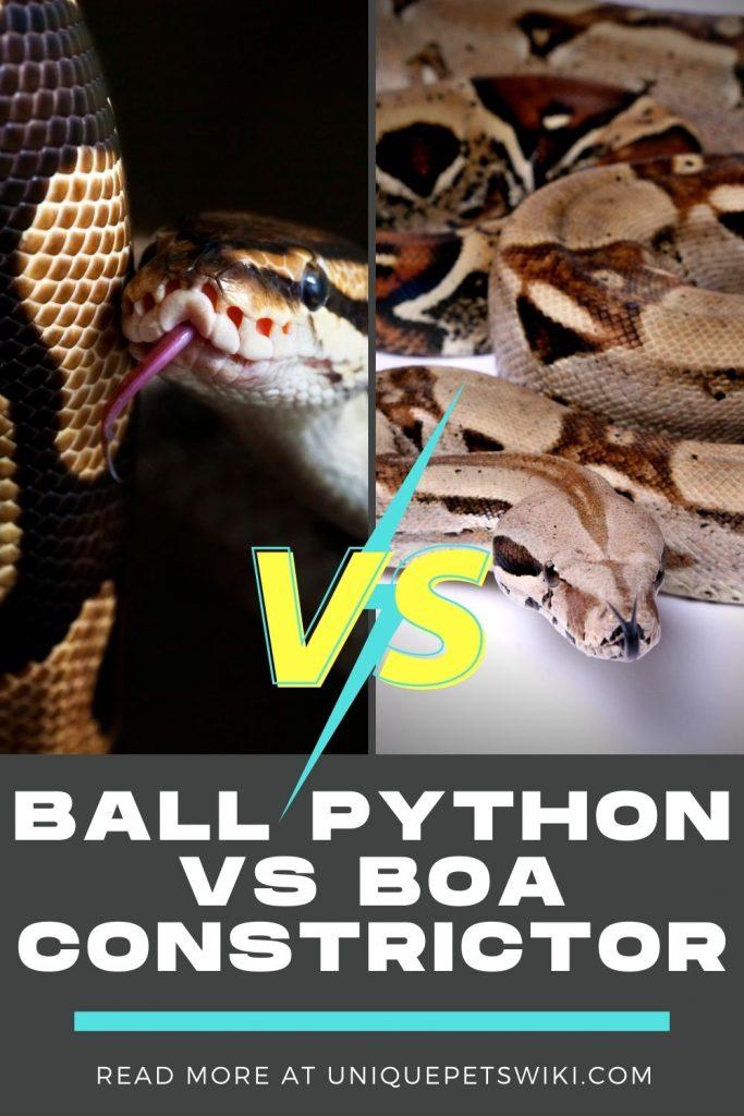 Ball Python Vs Boa Constrictor Pinterest Pin