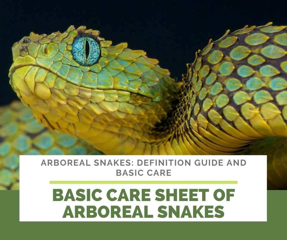 Basic Care Sheet Of Arboreal Snakes