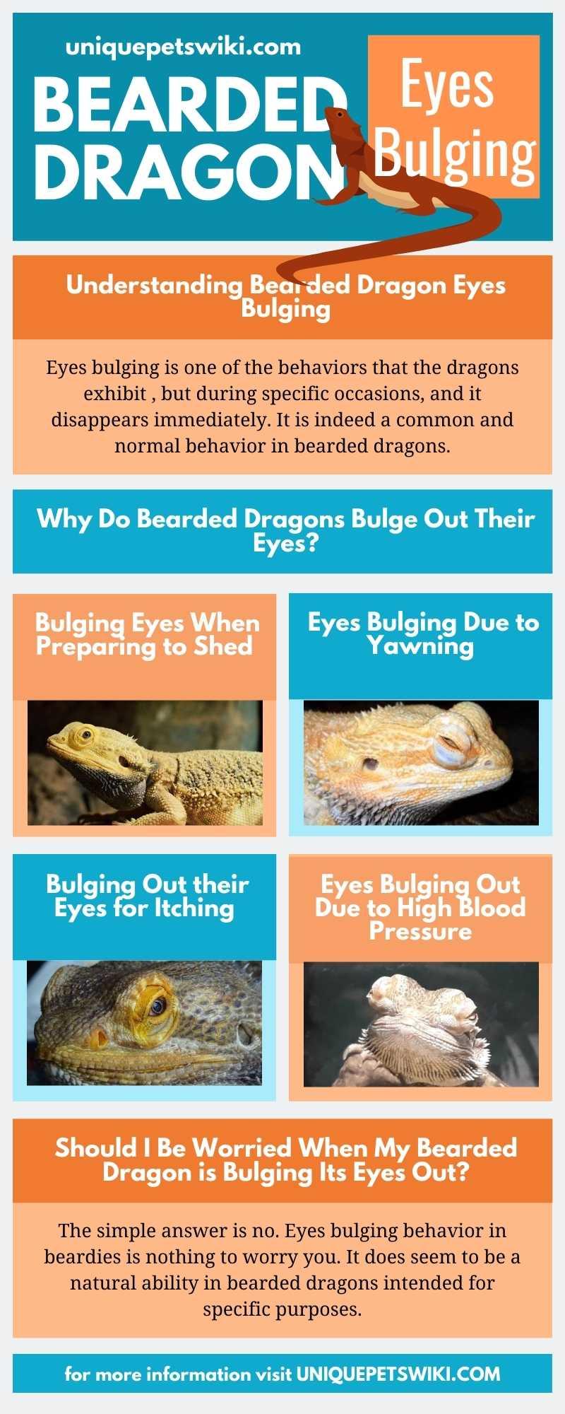 Bearded Dragon Eyes Bulging Infographics