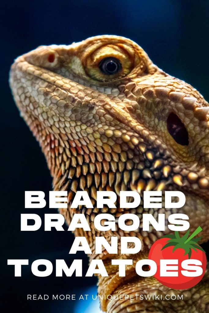 Bearded Dragons and Tomatoes Pinterest Pin