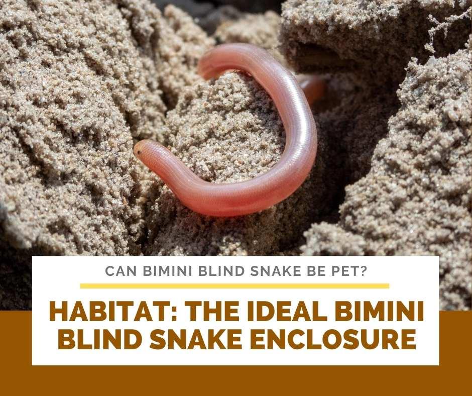 Habitat: The Ideal Bimini Blind Snake Enclosure