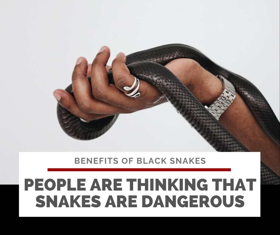 People Are Thinking That Snakes Are Dangerous