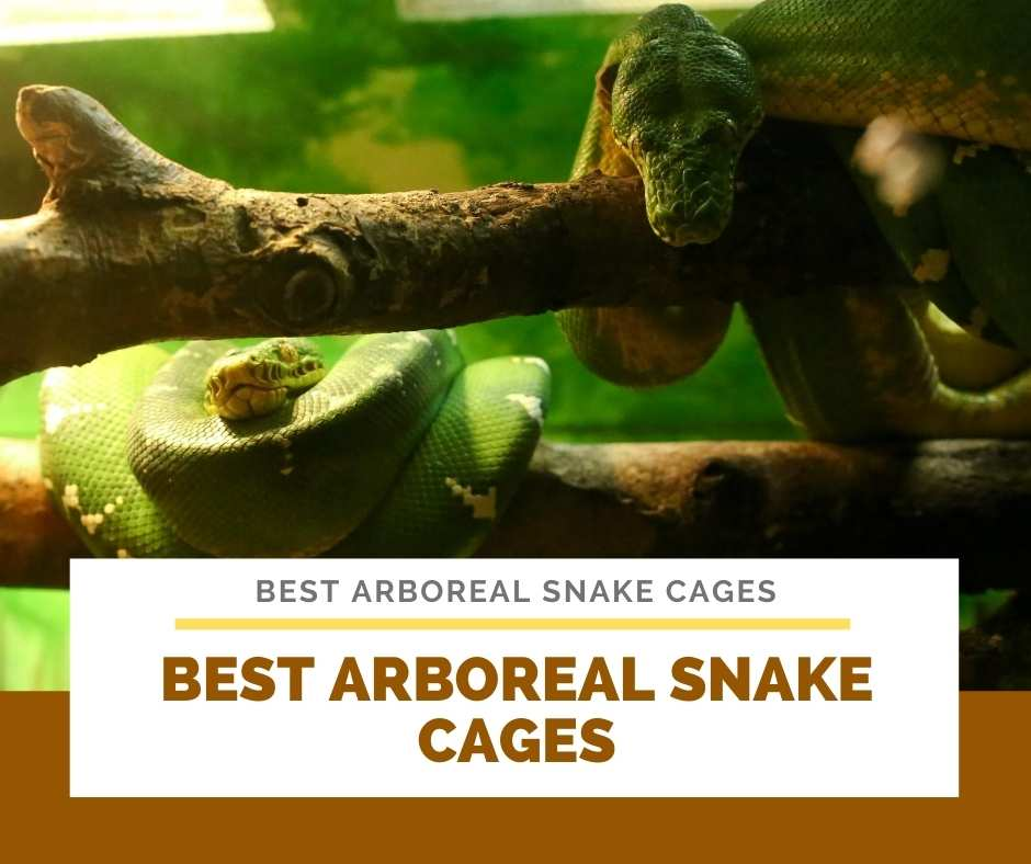 Best Arboreal Snake Cages
