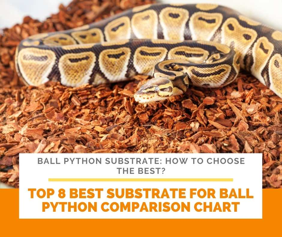 Top 8 Best Substrate For Ball Python Comparison Chart