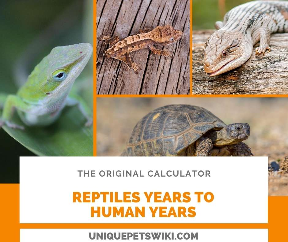 calculate reptiles years to human years