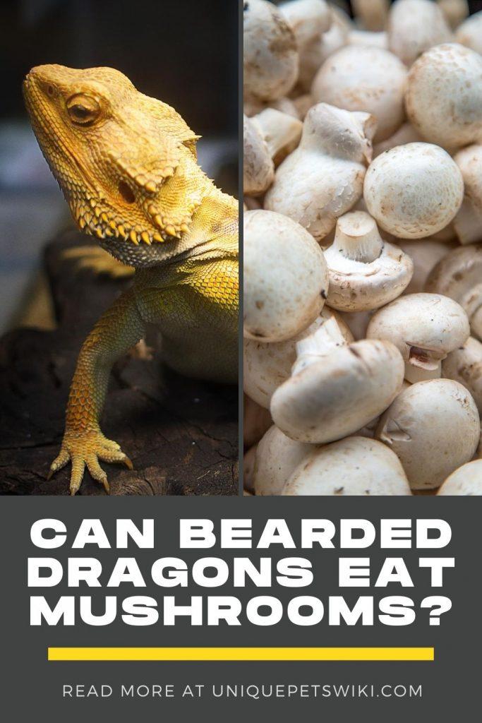 Can Bearded Dragons Eat Mushrooms Pinterest Pin