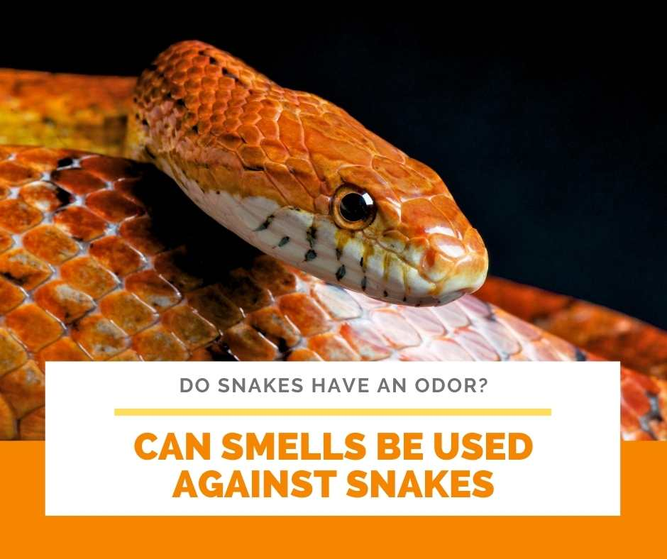 Can Smells Be Used Against Snakes