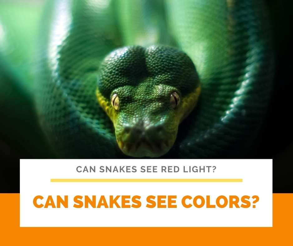 Can Snakes See Colors?