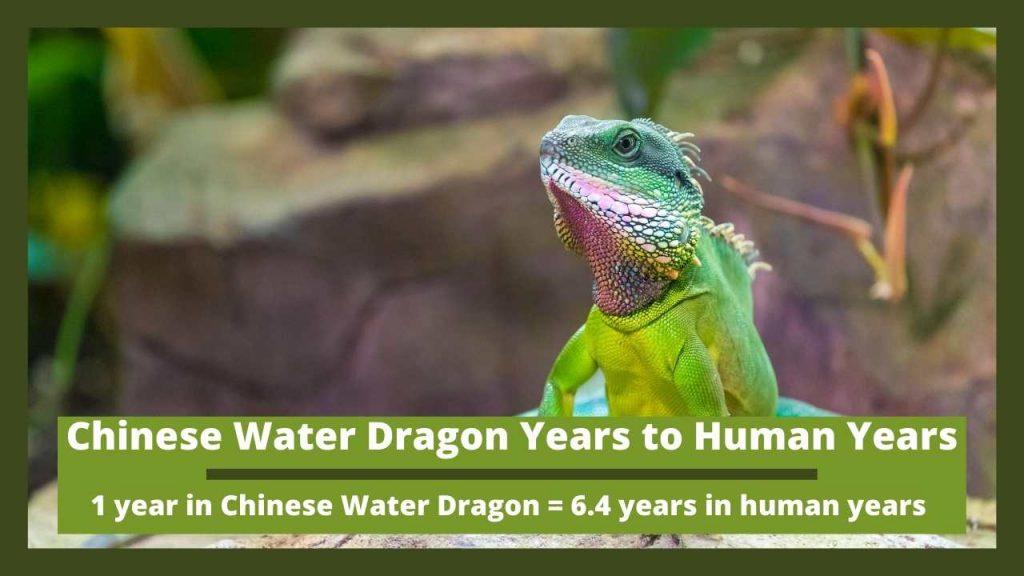 Chinese Water Dragon Years to Human Years