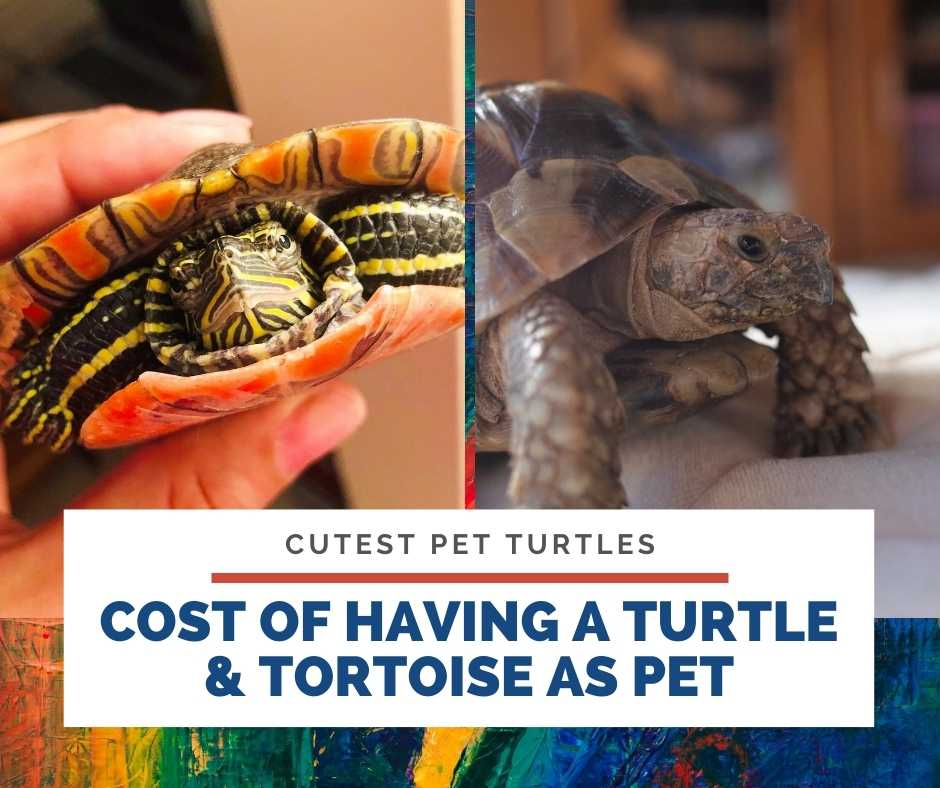 Cost Of Having A Turtle & Tortoise As Pet