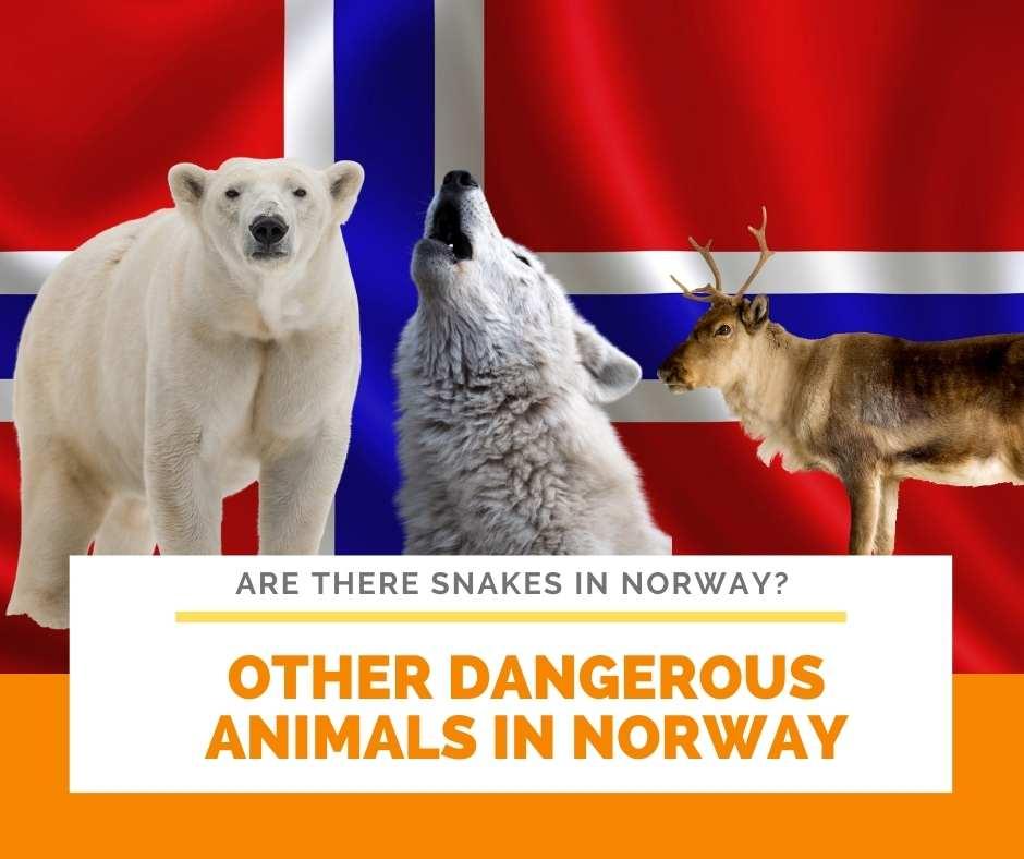 Other Dangerous Animals In Norway