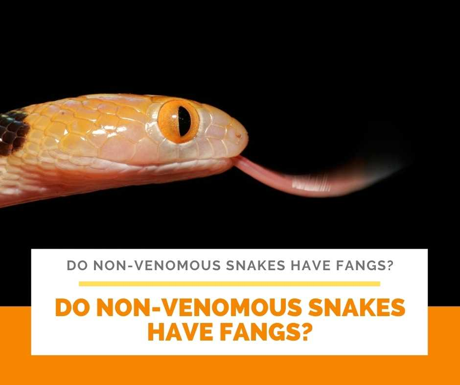 Do Non-Venomous Snakes Have Fangs?