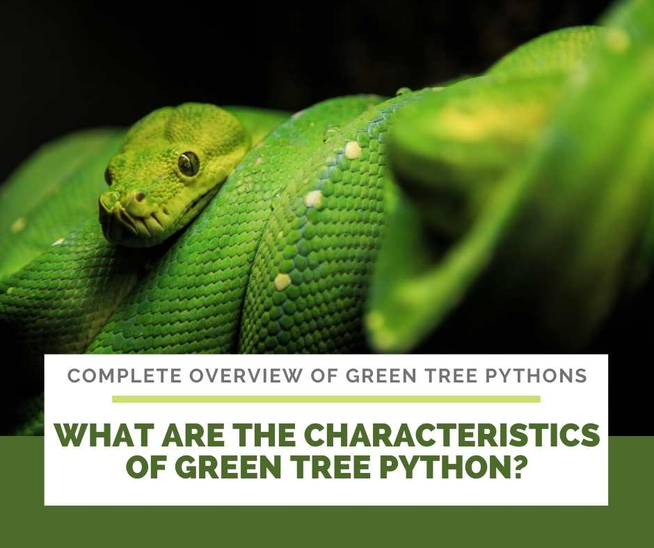 What Are The Characteristics Of Green Tree Python?