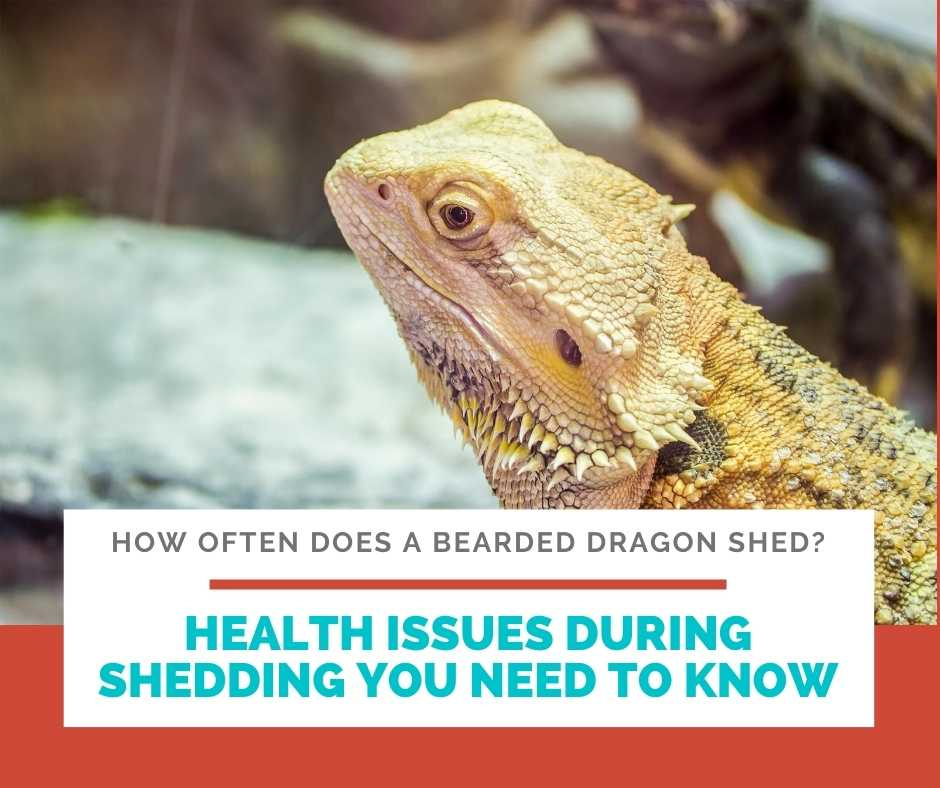 Health Issues During Shedding You Need To Know