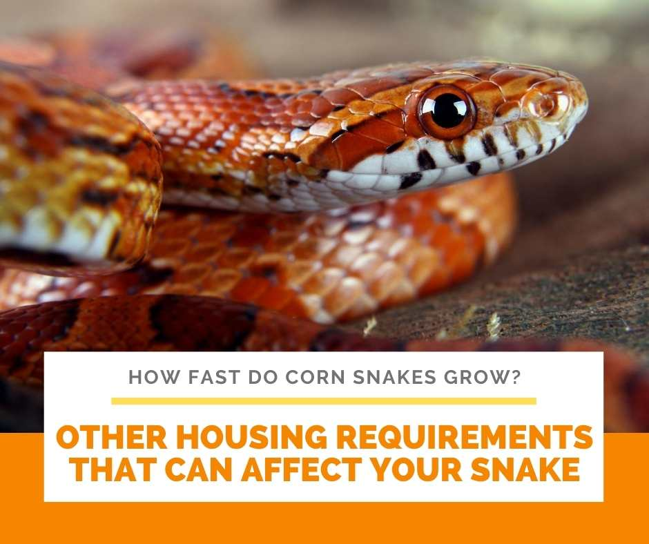 Other Housing Requirements That Can Affect Your Snake