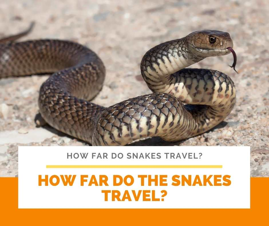 How Far Do The Snakes Travel?