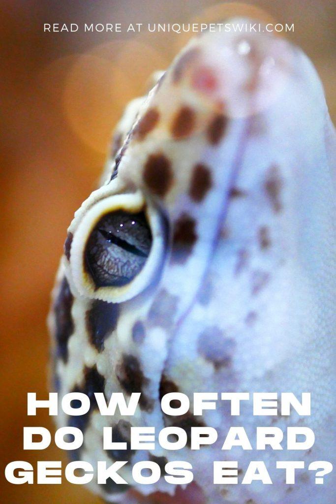 How Often Do Leopard Geckos Eat Pinterest Pin
