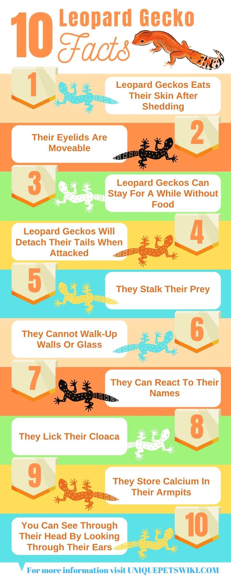 10 Leopard Geckos Facts Infographics