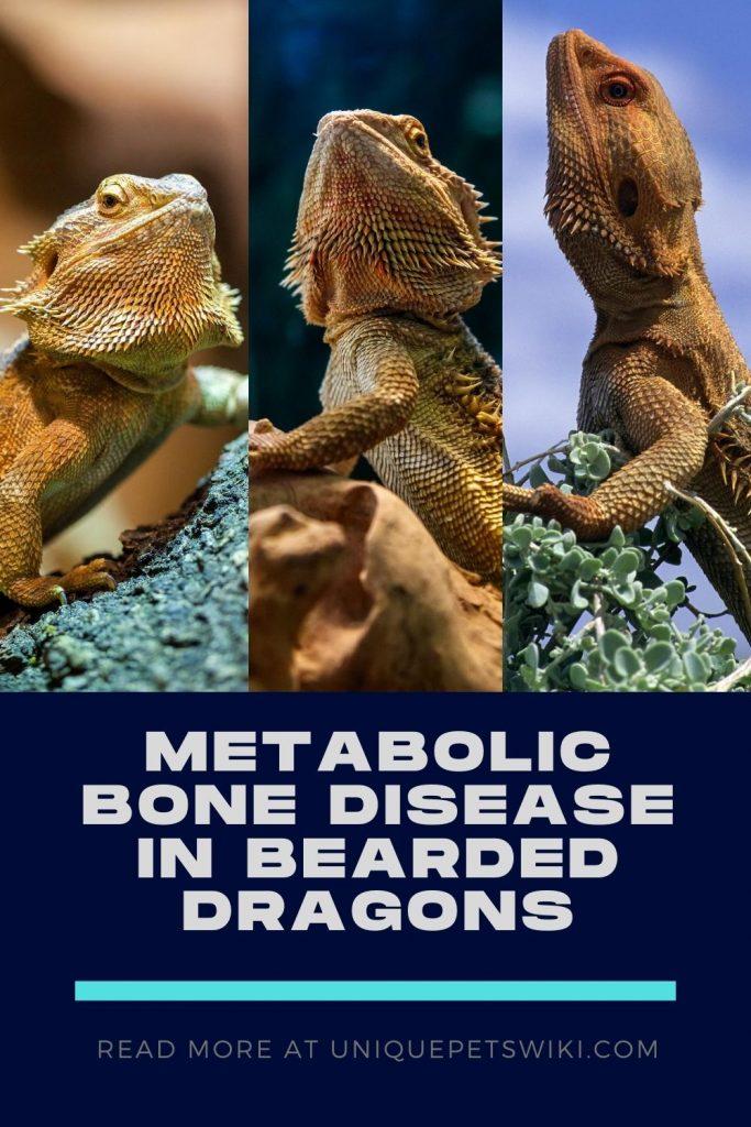 Metabolic Bone Disease in Bearded Dragons Pinterest Pin