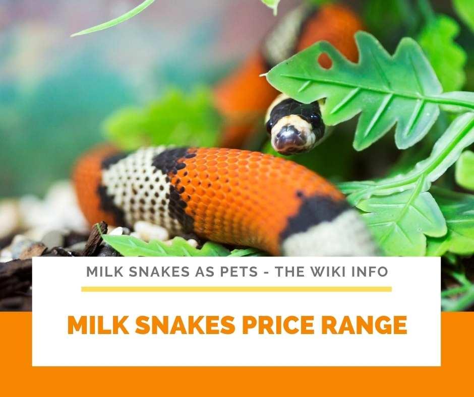 Milk Snakes Price Range