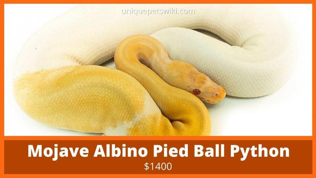 Mojave Albino Pied Ball Python