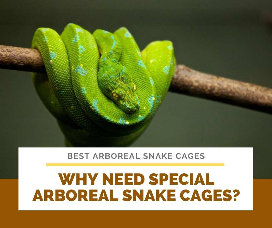 Why Need Special Arboreal Snake Cages?