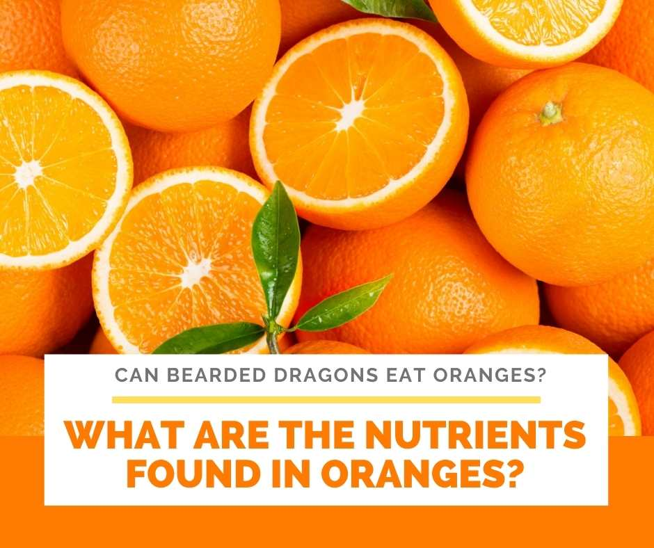 What Are The Nutrients Found In Oranges?