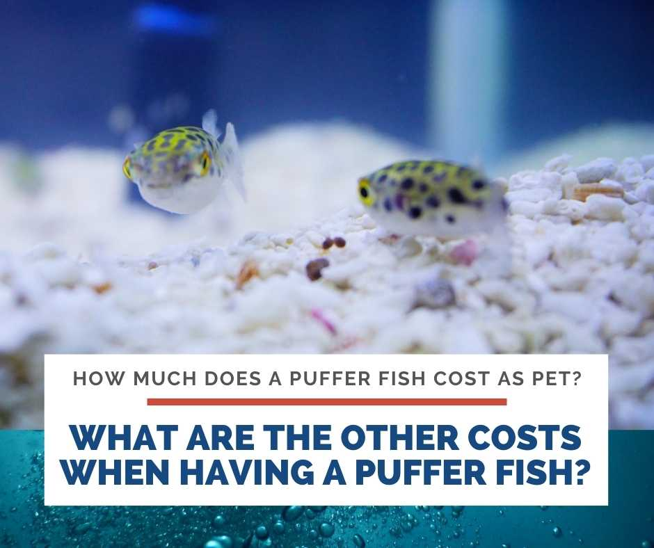 What Are The Other Costs When Having A Puffer Fish?